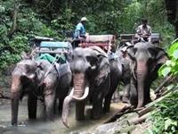 Самый дорогой в мире кофе варят из испражнений слона