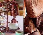 Самое дорогое кофе в мире выделяют слоны на курорте Анантара