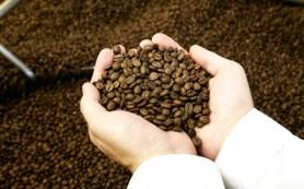 Президент Гватемалы объявил режим ЧС из-за «кофейной ржавчины»