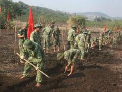 Засуха во Вьетнаме губит урожай кофе и риса