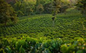 Обнародованы удивительные факты о кофеине
