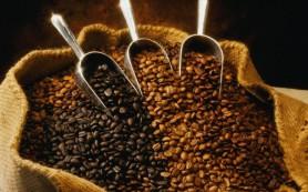 Какой кофе выбрать: полезные советы
