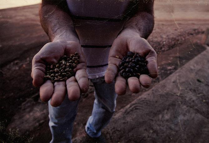 Как собирают кофе в Бразилии