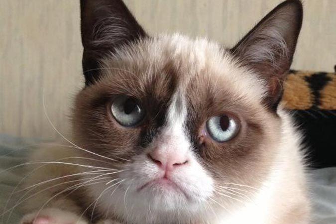 «Сердитый кот» представит свой собственный кофе