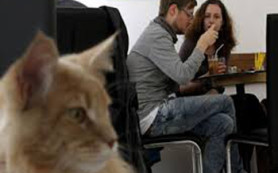 В Венгрии появилось новое «котокафе», где можно выпить кофе и пообщаться с кошками
