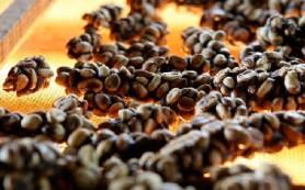 Ученые придумали способ, как проверить подлинность самого дорогого в мире кофе