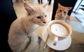 Парижское кафе предлагает мурлыкающих котов как бонус к кофе