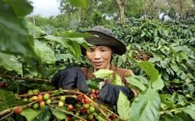 Основные распространенные сорта кофе