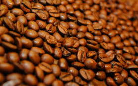 Изменение климата может вызвать глобальный неурожай кофе