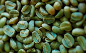Что нужно знать о зеленом кофе для похудения