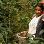 В Никарагуа разработали туристический проект под названием «Маршрут Кофе»