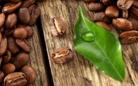 Кофейные листья тоже полезны