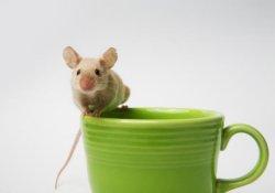 Кофе поможет защититься от ожирения