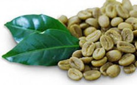 Зеленый кофе поможет в профилактики диабета