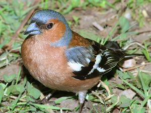 Названия птиц Ленинградской области: есть ли необычные представители