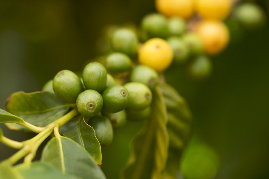 10 замечтательных кофейных лайфхаков