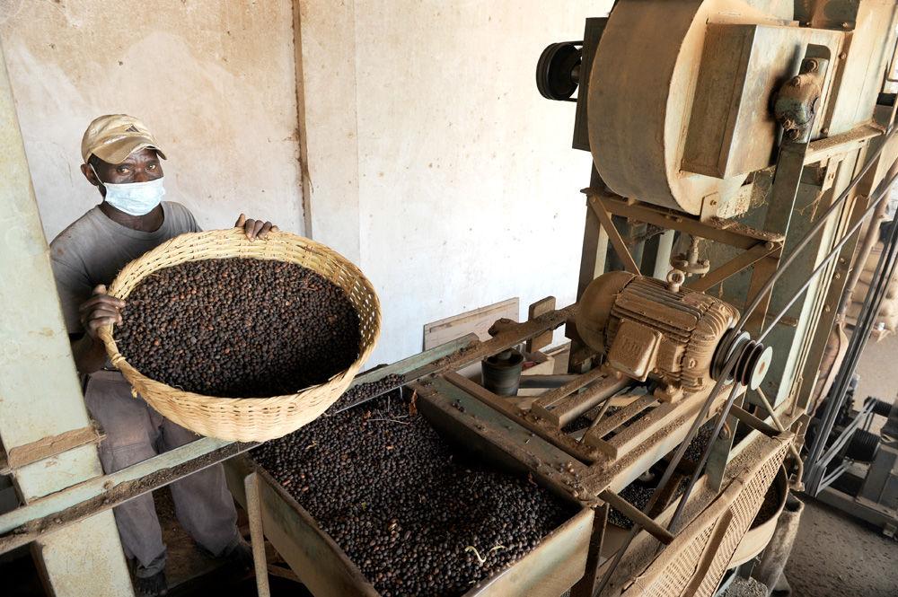 Ангола хочет снова стать крупной страной-производителем кофе
