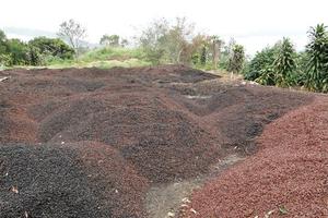 Кофе как способ получения биотоплива