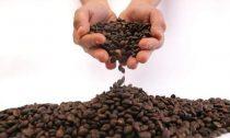 Медики объяснили, к чему приводит отказ от кофеина