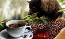 Почему самый дорогой сорт кофе не каждый отважится попробовать