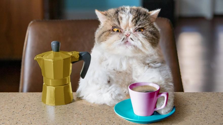 4 «кофейных» факта для завтрака
