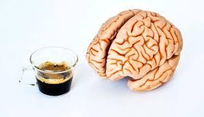 Влияние кофеина на функции мозга
