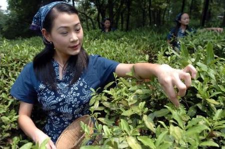 Особенности производства чая в Китае