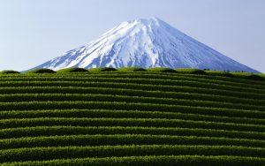 Чай в Японии: производство, сорта, чайное искусство