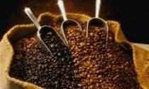 Кофеин может изменять структуру коры головного мозга