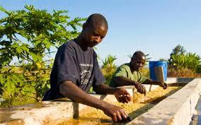 Как заваривать Танзанию Кигома