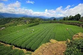 Тайваньские улуны