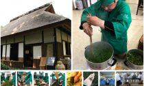 Тэмоми – традиционная японская ручная обработка чайного листа