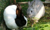 Потребности домашних кроликов и их содержание