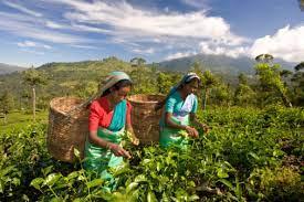 Традиции кофе в Индии