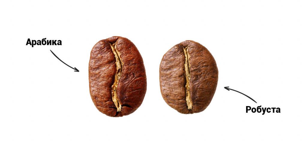 Различия зёрен арабики и робусты. В чём разница во вкусе?