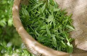 Свойства и воздействие зеленого чая на организм