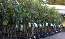 Преимущества приобретения саженцев плодовых деревьев и декоративных растений в киевском питомнике